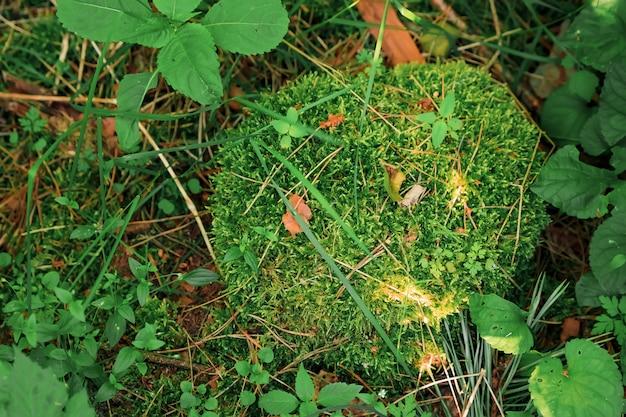 Groen mos bedekt de ruwe stenen in het bos. weergeven met macroweergave. rotsen vol met mos.