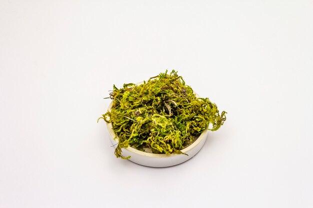 Groen mos dat op witte achtergrond wordt geïsoleerd. decoratief element in keramische plaat