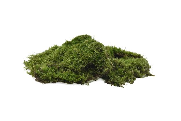 Groen mos geïsoleerd op een witte achtergrond