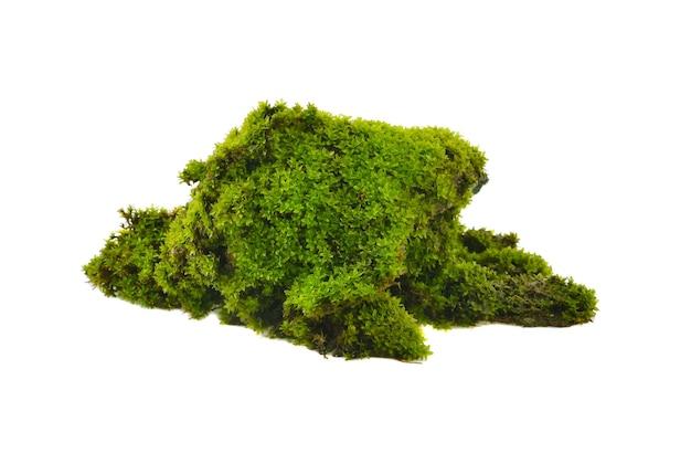 Groen mos geïsoleerd op wit