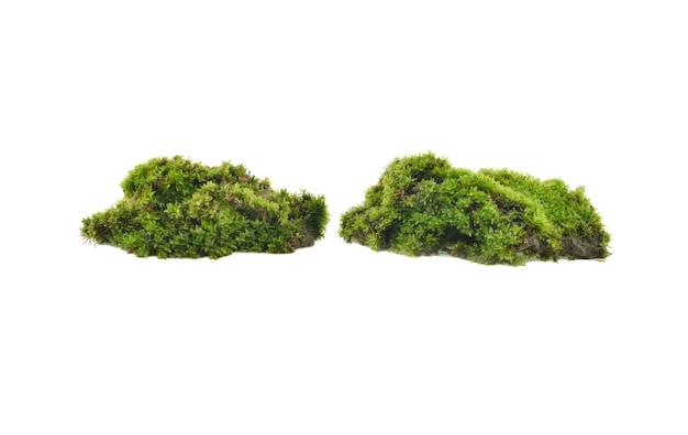 Groen mos geïsoleerd op witte achtergrond