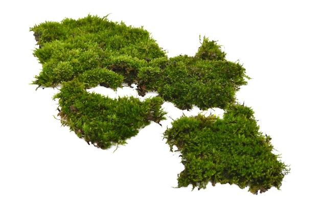 Groen mos met geïsoleerd gras