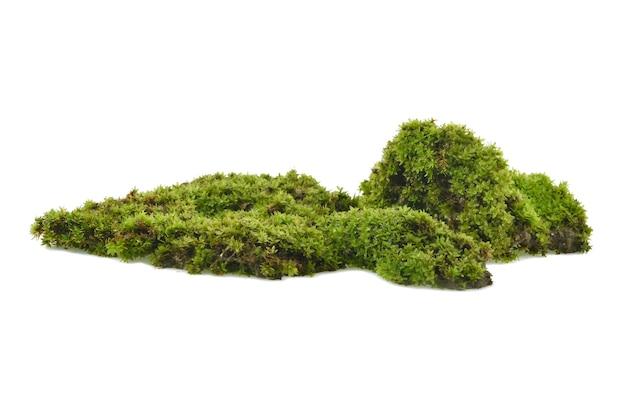 Groen mos met gras dat op wit wordt geïsoleerd