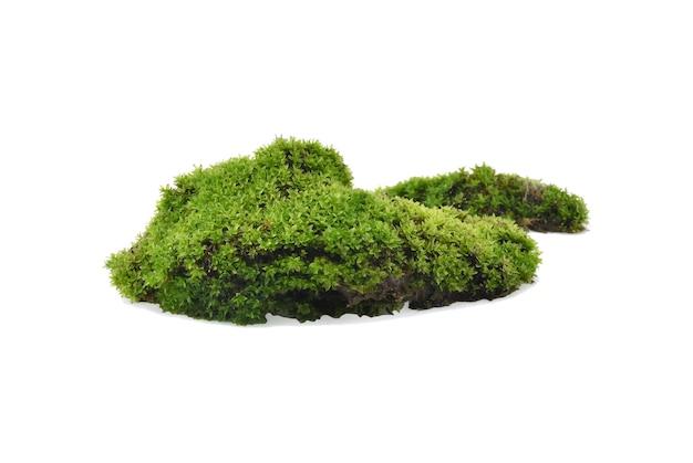 Groen mos met gras dat op witte achtergrond wordt geïsoleerd