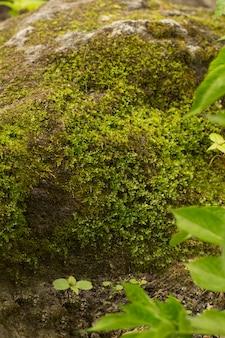 Groen mos op de oude steen. close-up shot