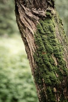 Groen mos op een boom