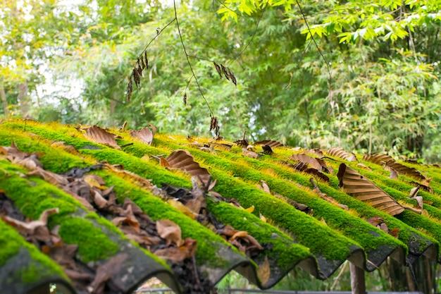 Groen mos op het dak