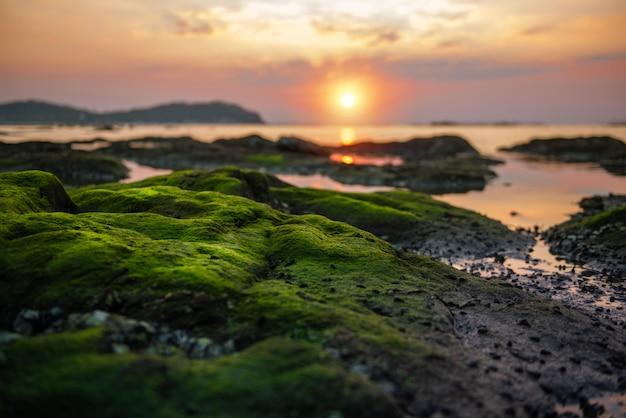 Groen mos op het rif