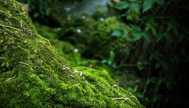 Groen mos op steen bij regenwoud