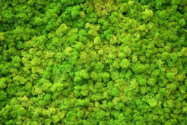 Groen mos