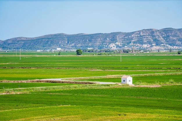 Groen padieveldlandschap in albufera de valencia