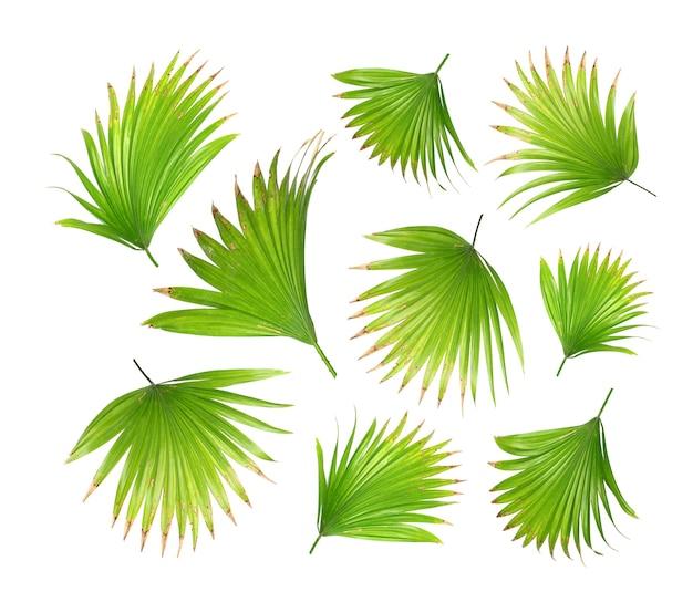 Groen palmblad dat op wit voor de zomerachtergrond wordt geïsoleerd