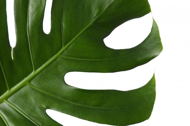 Groen palmblad dat op wit wordt geïsoleerd