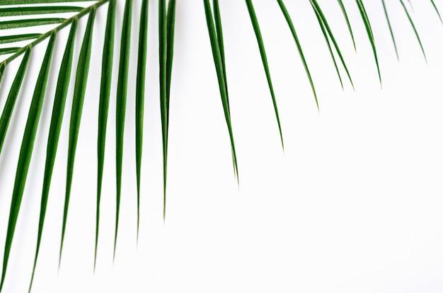 Groen palmblad en schaduw op wit