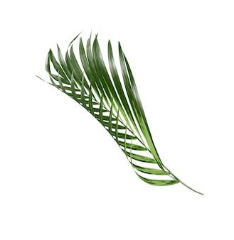 Groen palmblad isoleren op witte achtergrond
