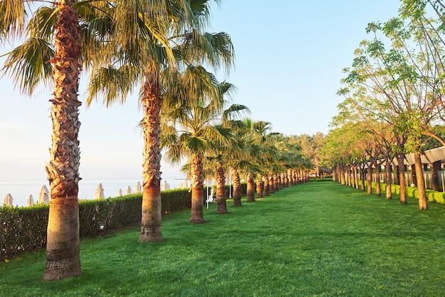Groen palmpark en hun schaduwen op het gras.