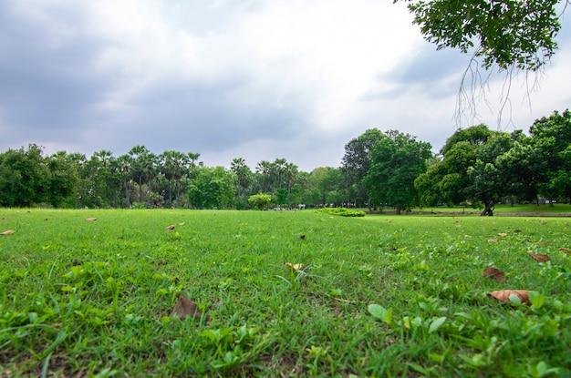 Groen park met plant in regenseizoen