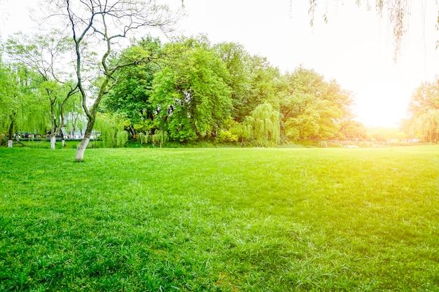 Groen park uitzicht