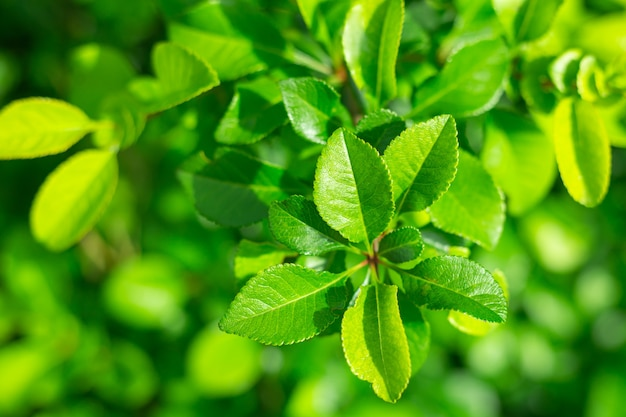 Groen sappig bladeren tak close-up zomer lommerrijke achtergrond lente helder bossige banner