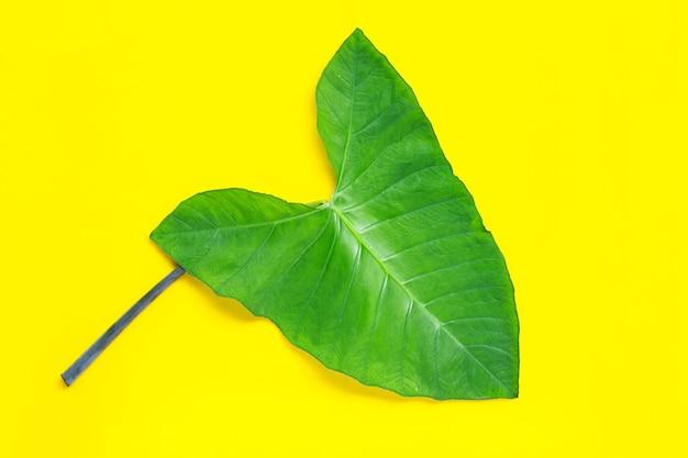 Groen taroblad dat op geel oppervlak wordt geïsoleerd.