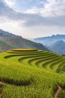 Groen terraspadieveld in mu cang chai, vietnam