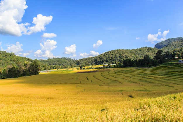 Groen terrasvormig padieveld in mae klang luang, mae chaem, chiang mai, thailand