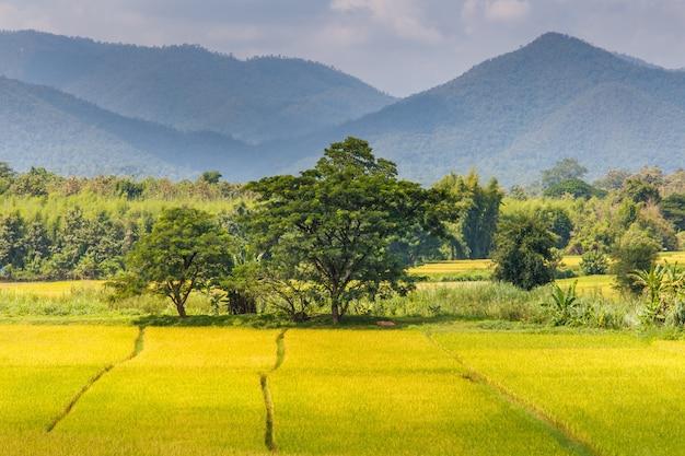 Groen terrasvormig padieveld in mae la noi, maehongson provincie, thailand
