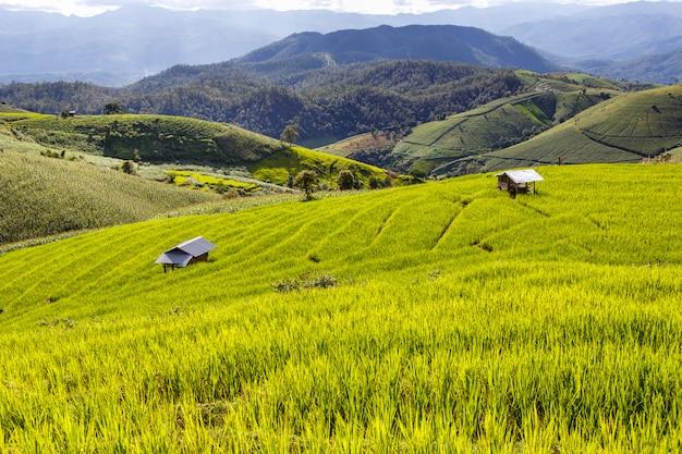 Groen terrasvormig padieveld in pa pong pieng, chiang mai, thailand