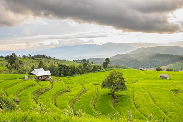 Groen terrasvormig padieveld in pa pong pieng, mae chaem, chiang mai, thailand