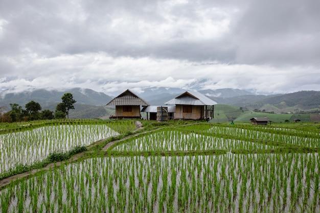 Groen terrasvormig padieveld in thailand
