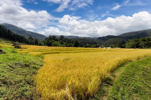 Groen terrasvormig rijstveld in mae klang luang, provincie chiang mai, thailand