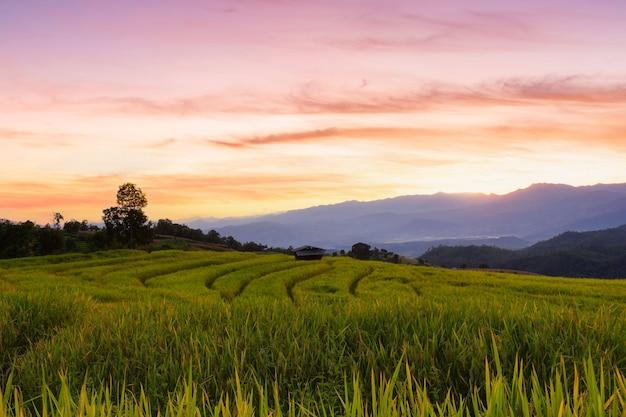 Groen terrasvormig rijstveld in pa pong pieng, chiang mai, thailand