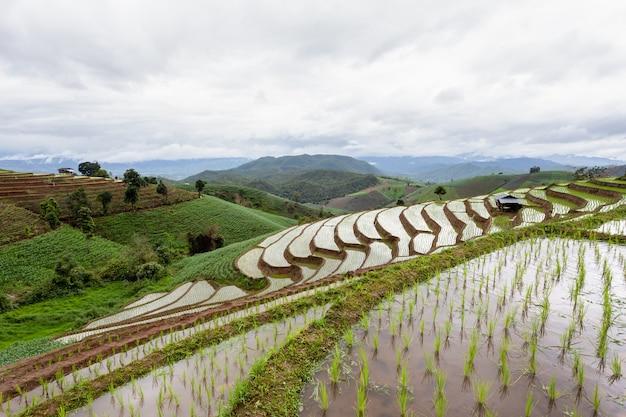 Groen terrasvormig rijstveld in pa pong pieng, mae chaem, chiang mai, thailand