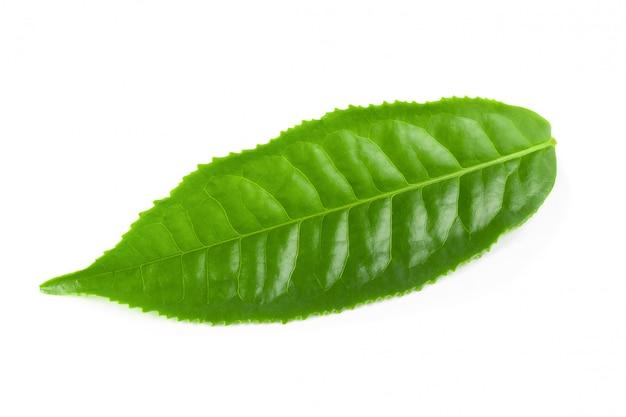 Groen theeblaadje dat over witte achtergrond wordt geïsoleerd