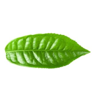 Groen theeblad dat over wit wordt geïsoleerd