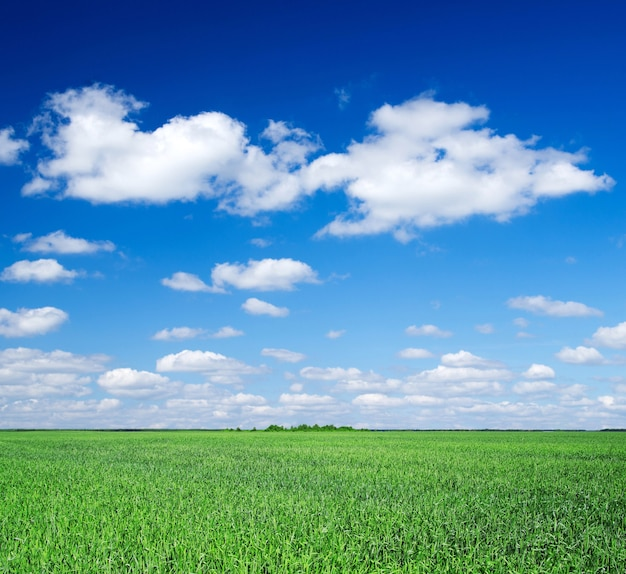Groen veld en blauwe lucht