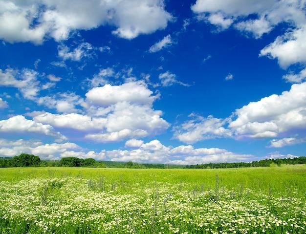 Groen veld en de blauwe lucht