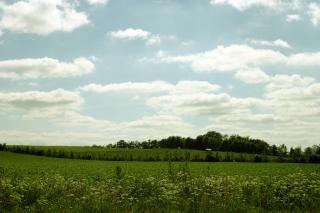 Groen veld, gewassen, planten