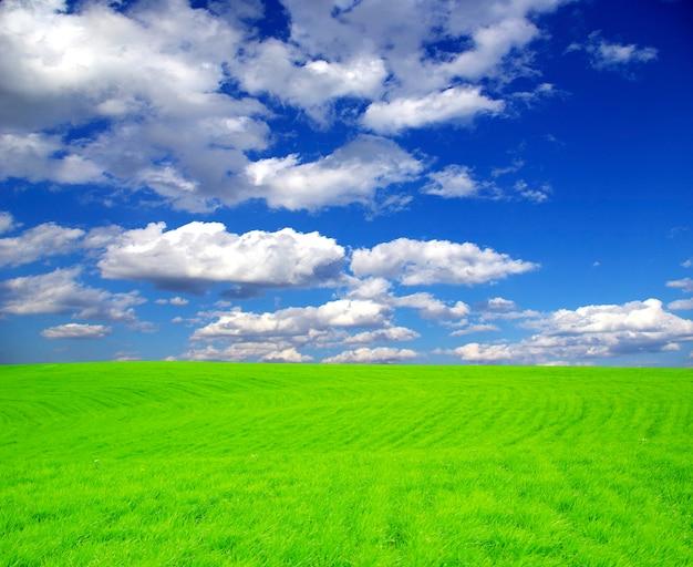 Groen veld onder de blauwe hemel. prachtig landschap