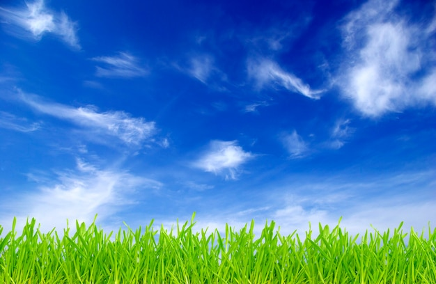 Groen veld op een achtergrond van de blauwe lucht