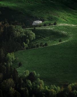 Groen veld op plateau. vredige weiden en bomen