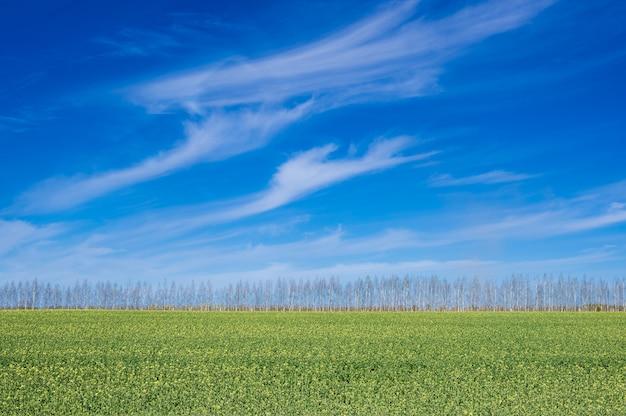 Groen veld tegen de blauwe hemel