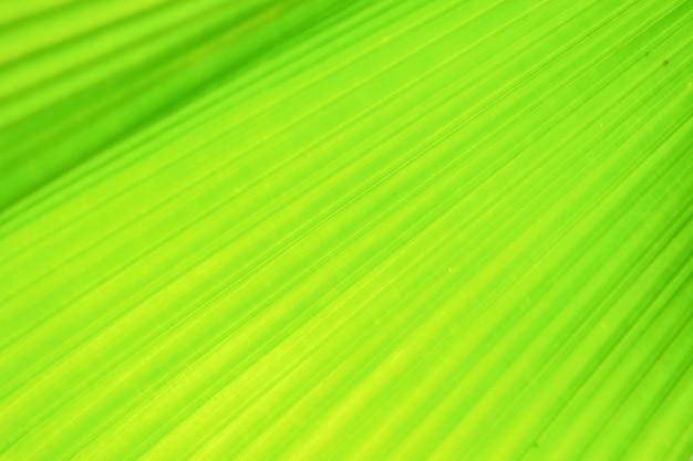 Groen ventilatorpalmblad op vage motieachtergrond,