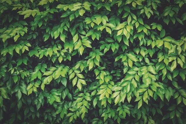 Groen verlof voor natuurlijke achtergrond met vintage toon.