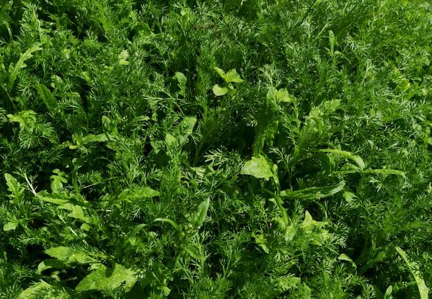 Groen weelderig blad, natuurlijk bladerenplantpatroon of textur