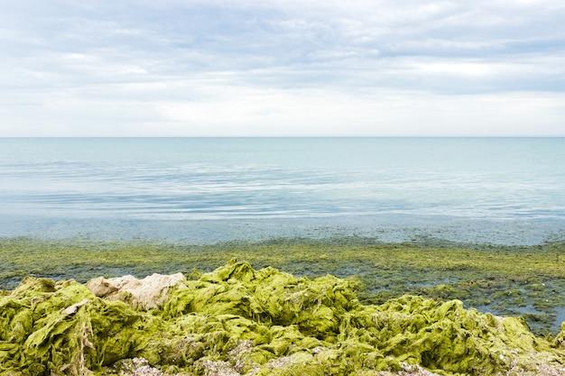 Groen zeewier en algen op stenen door de zee