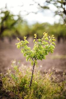 Groenbladige plant