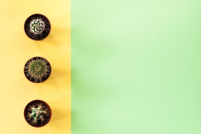 Groene achtergrond met kopie ruimte en gele streep met cactus drie.