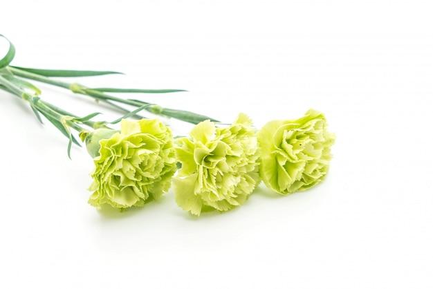 Groene anjerbloem