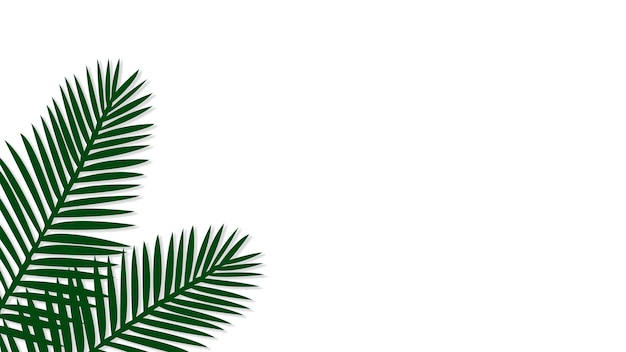 Groene areca palm